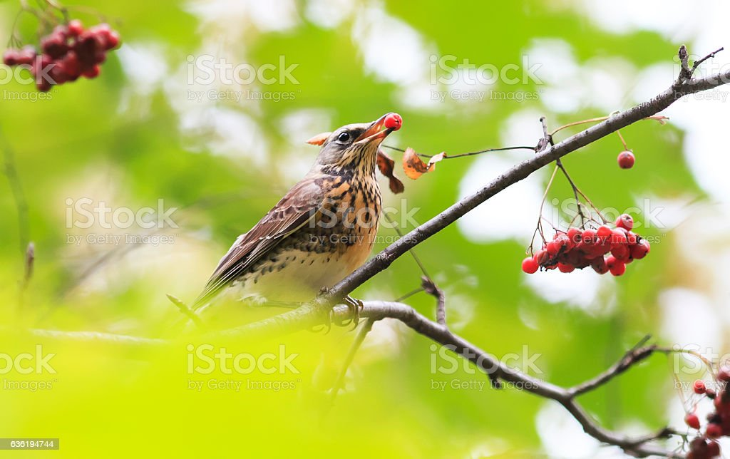 bird sitting in the Park among the green foliage stock photo