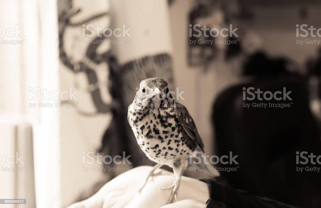 Bird Sitting On A Human Hand stock photo