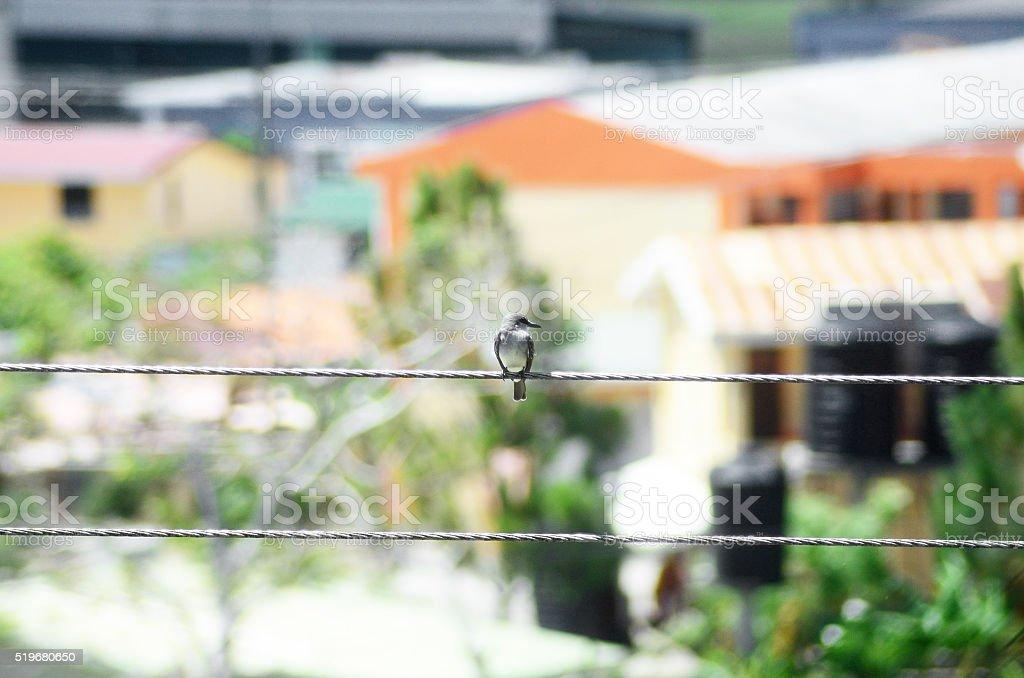 bird sitting on eletricity pole lines stock photo