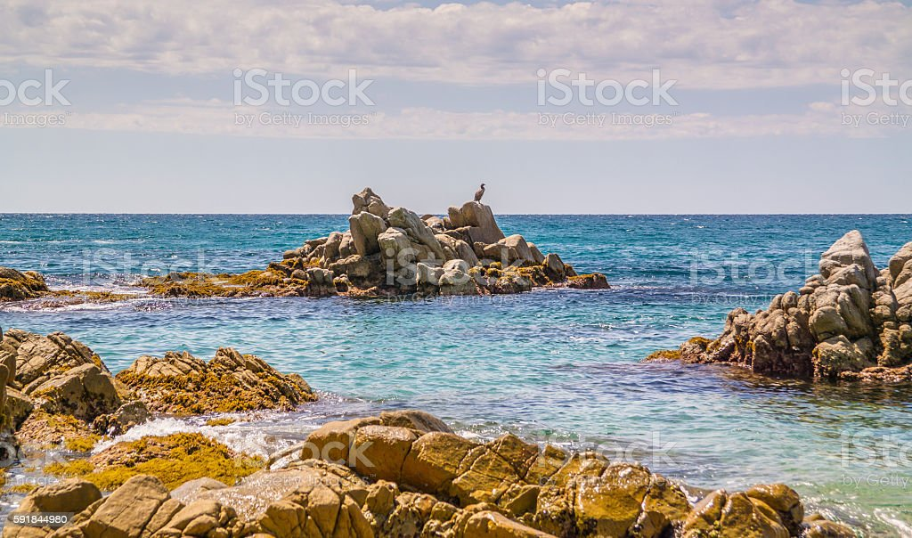 Bird sitting on the rocks in the water stock photo