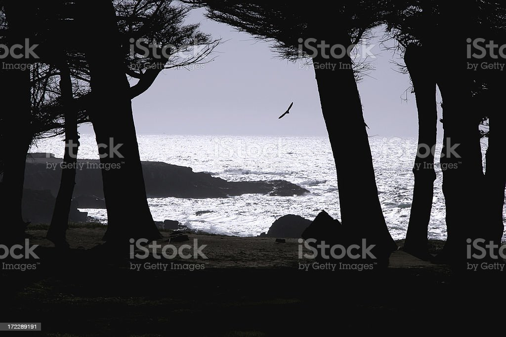 Bird Soaring With The Wind royalty-free stock photo