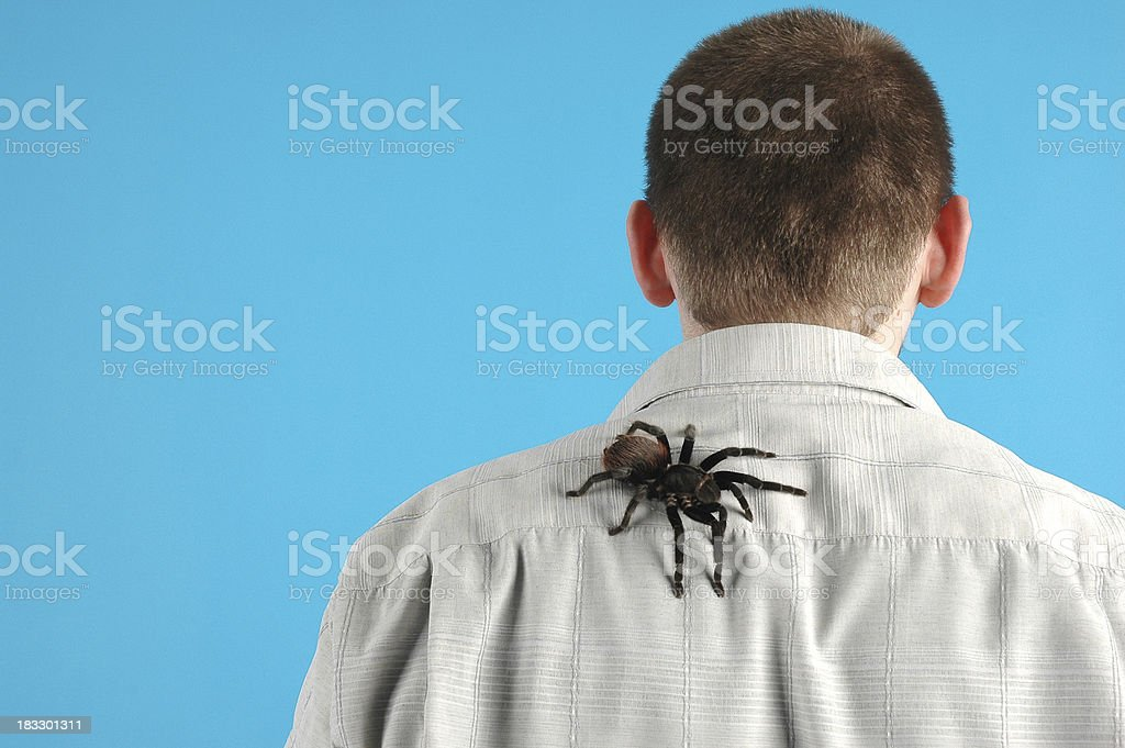 bird spider stock photo
