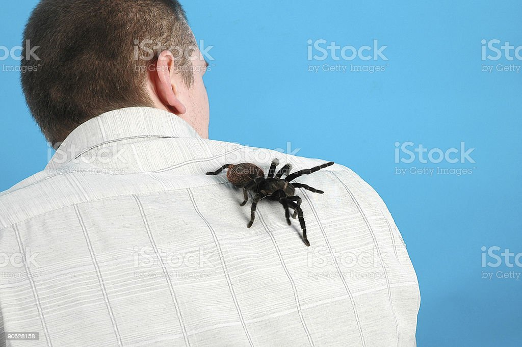 Bird spider royalty-free stock photo