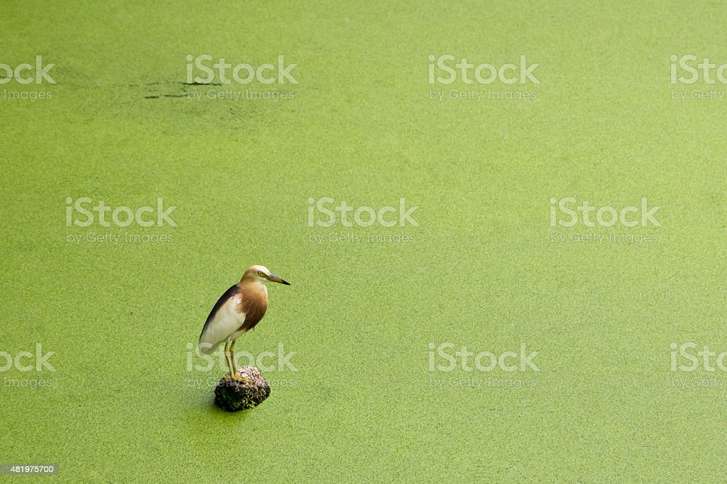 Bird standing on a stone. stock photo
