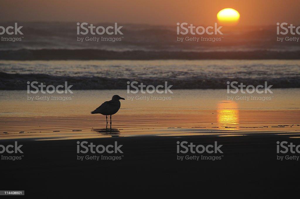 Bird Standing On Beach As Sun Sets stock photo