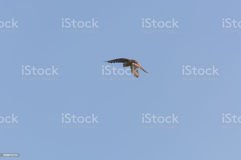 Bird stands on one spot in the air stock photo