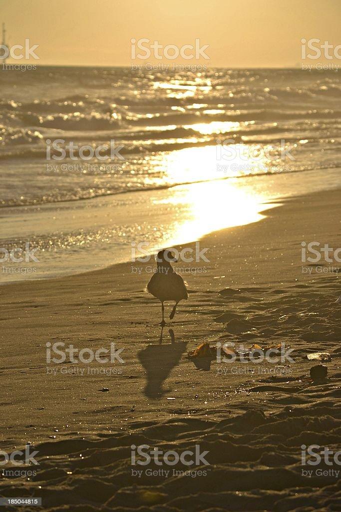 鳥夕暮れ時の散歩 ロイヤリティフリーストックフォト