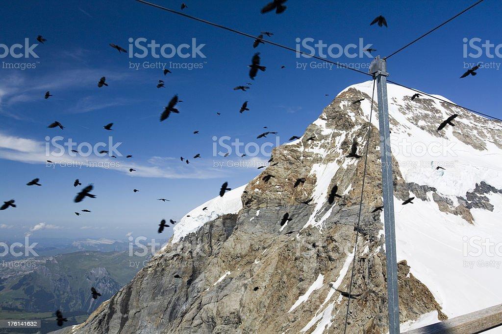 Bird swarm royalty-free stock photo