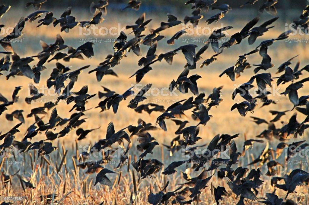 Bird swarming stock photo