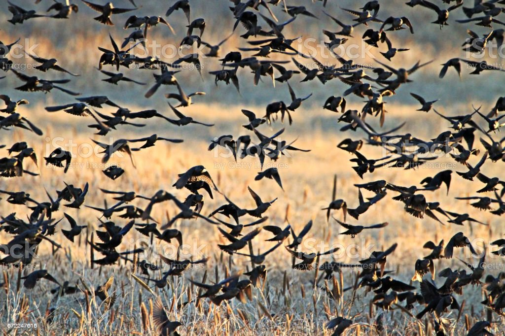 Bird swarming stock photo