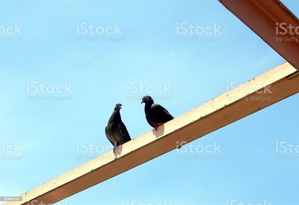 Bird Talk royalty-free stock photo
