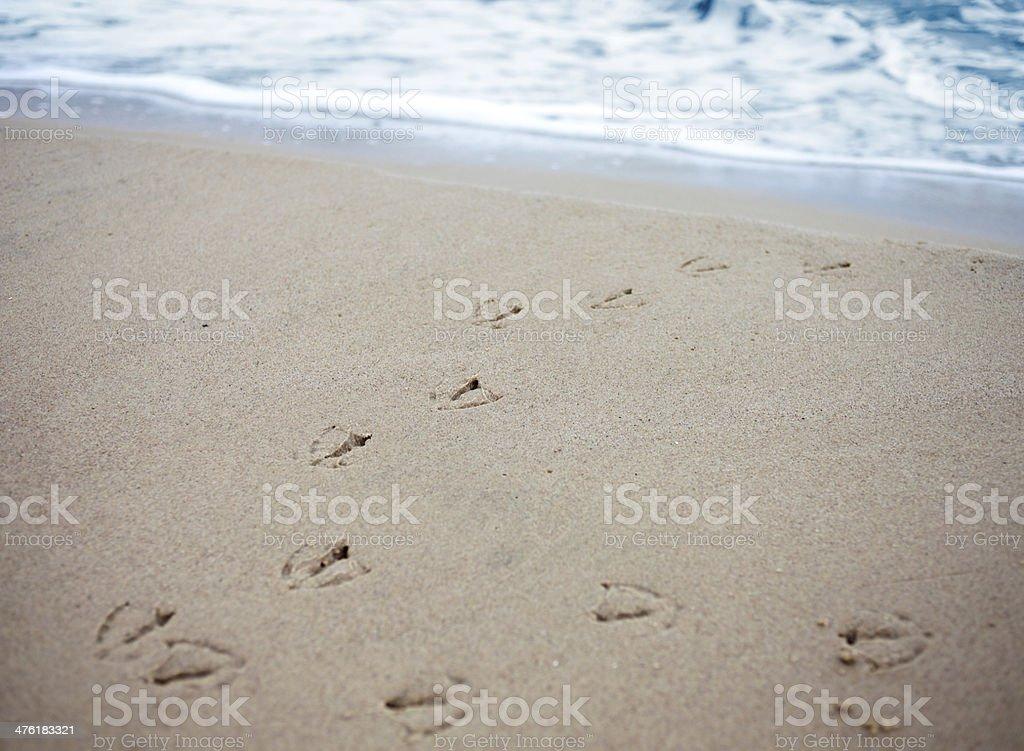 Bird tracks in sand of a beach. stock photo