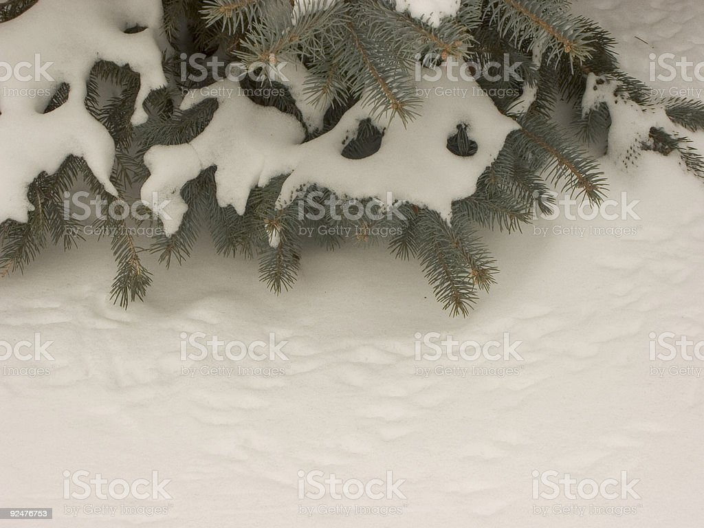 bird tracks in snow royalty-free stock photo