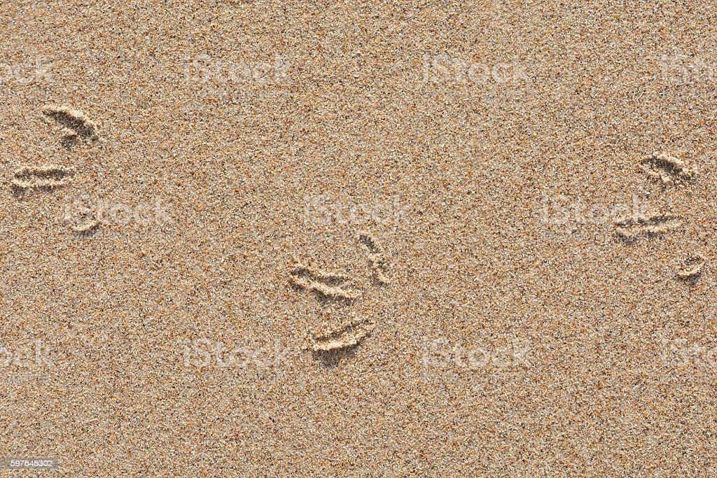 Bird tracks in the sand stock photo