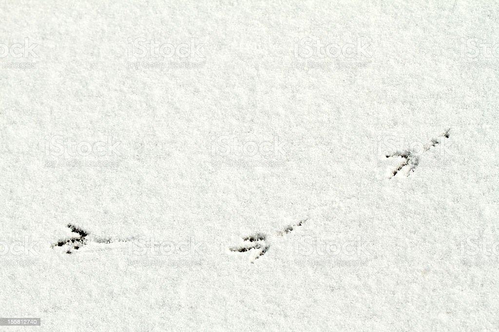 Bird tracks/foot prints stock photo