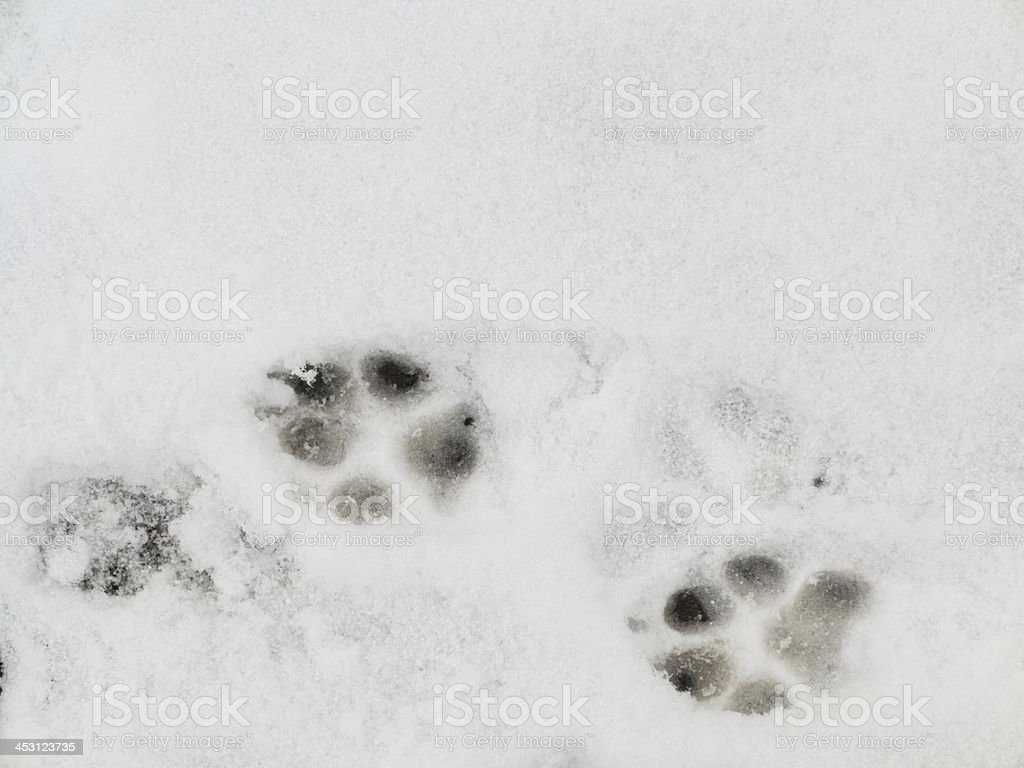 bird trail in the fresh snow royalty-free stock photo