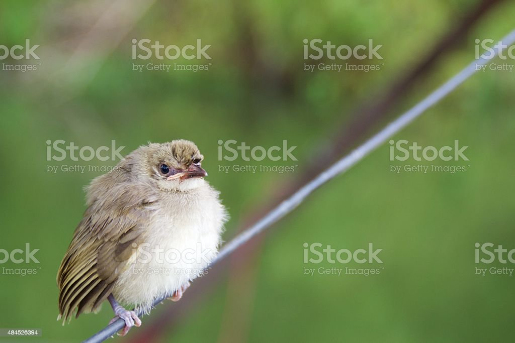 bird Waiting on wire stock photo