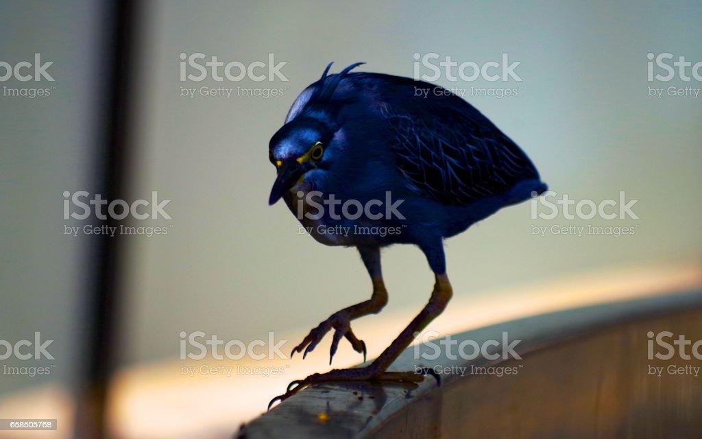 Bird walking on fence stock photo