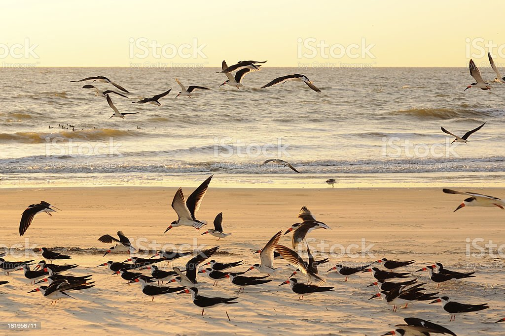 Bird Watch on Tybee Island stock photo