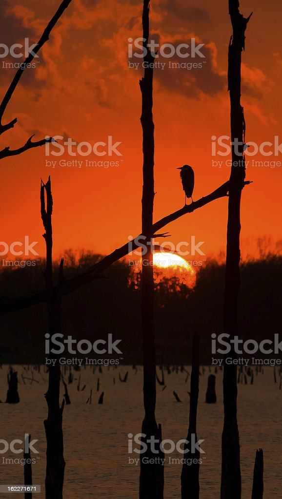 Bird Watches Tranquil Sunset stock photo