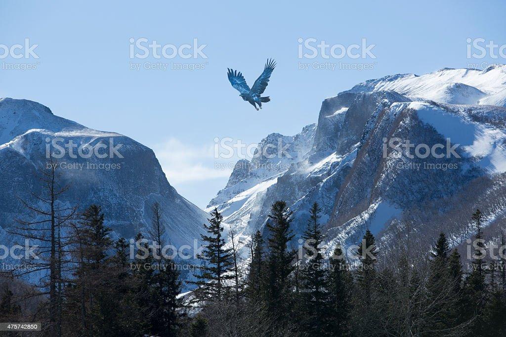 Bird wheeling above snow mountain range stock photo