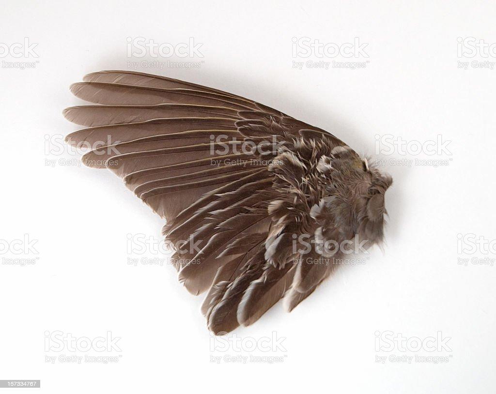 Bird Wing Close-up stock photo