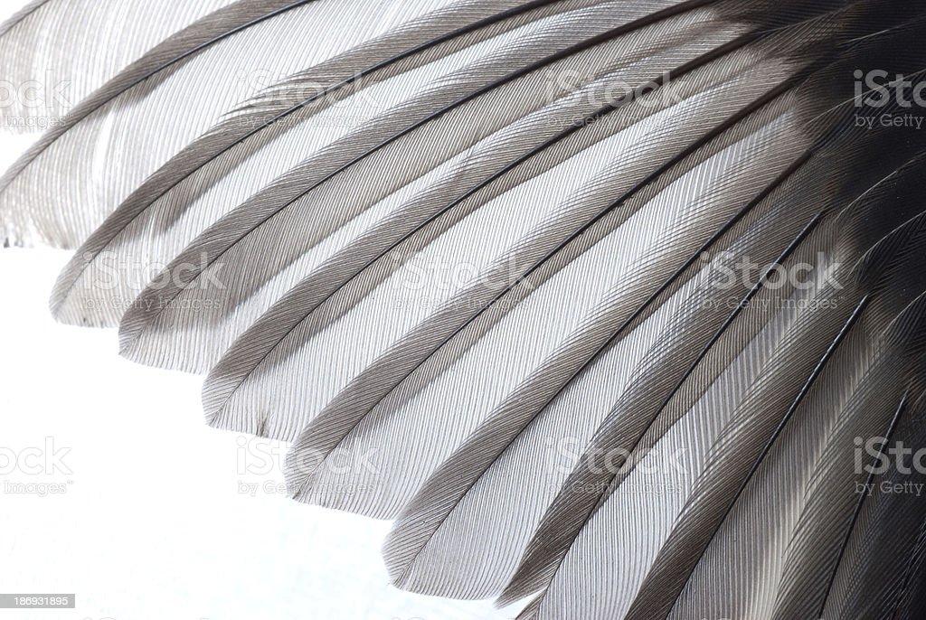 bird wing texture stock photo