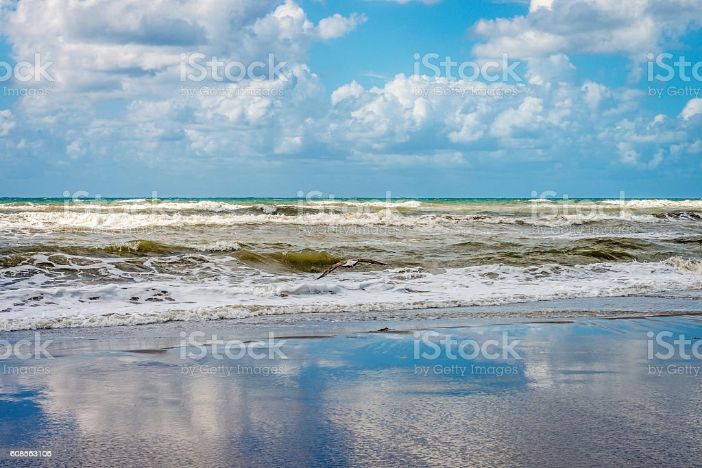 Bird with fish flying over shoreline against a cloudy sky stock photo