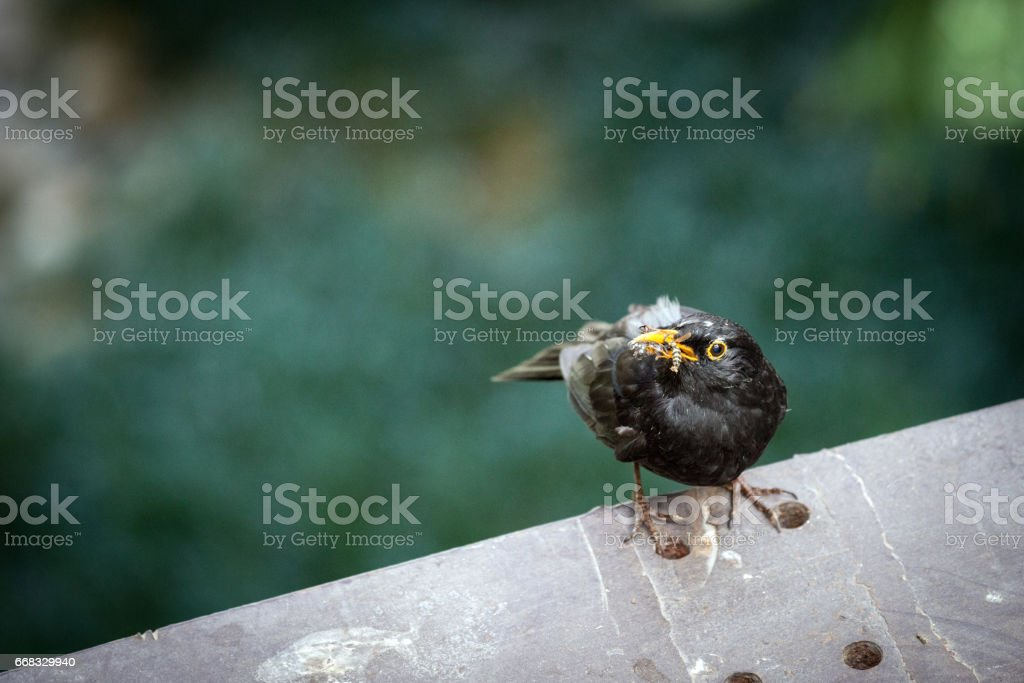 Bird with insect (wasp) in his mouth stock photo