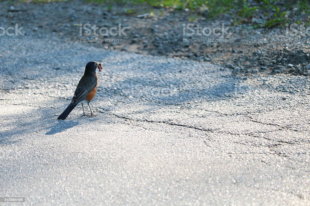 Bird with Morning Worm stock photo