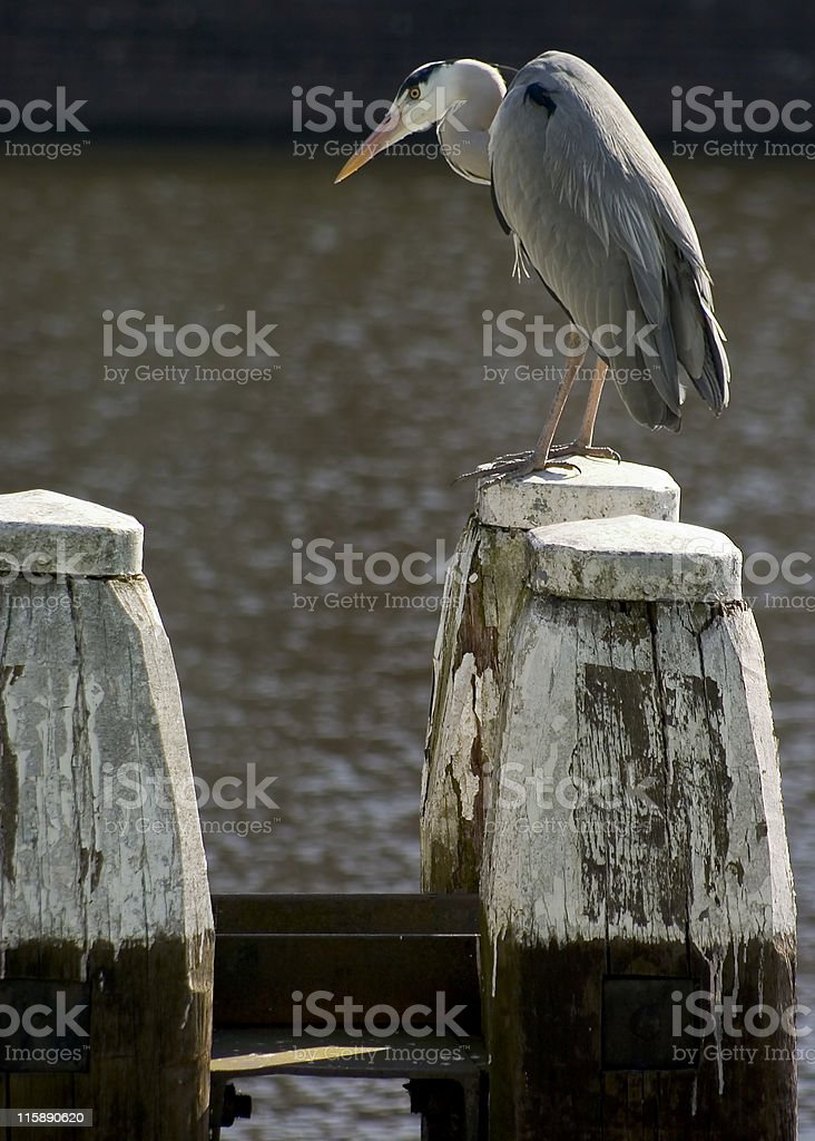 Bird with posts royalty-free stock photo