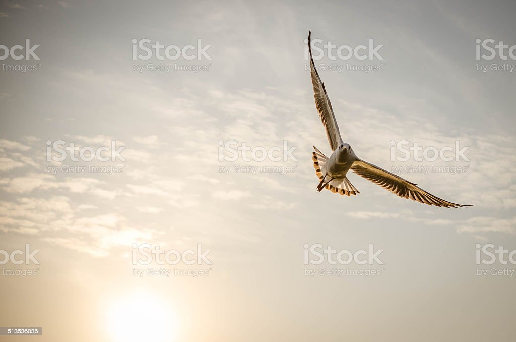 bird with sunset stock photo