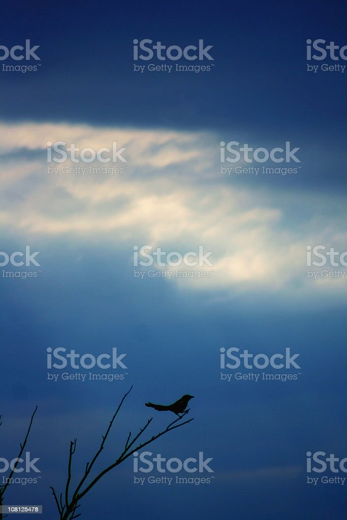 Bird with wings spread midair against a brilliant blue sky. stock photo