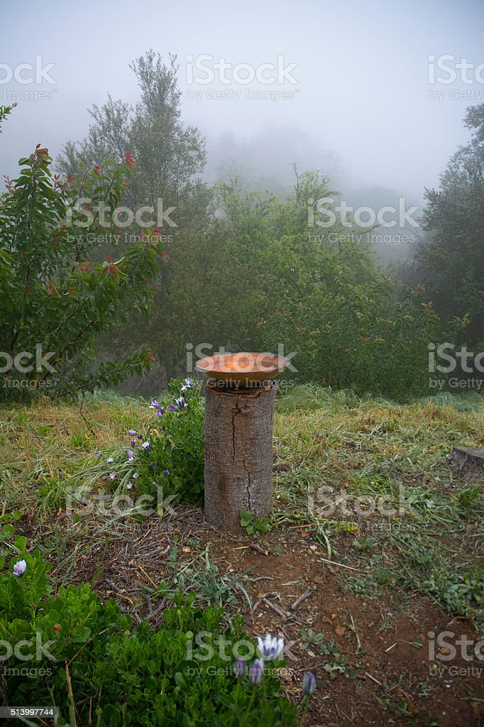 Birdbath On Log In Mountain Forest Fog stock photo