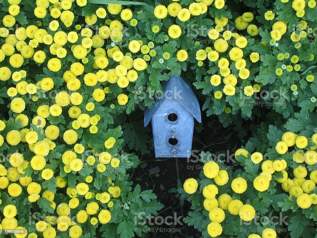 Birdhouse in flowers royalty-free stock photo