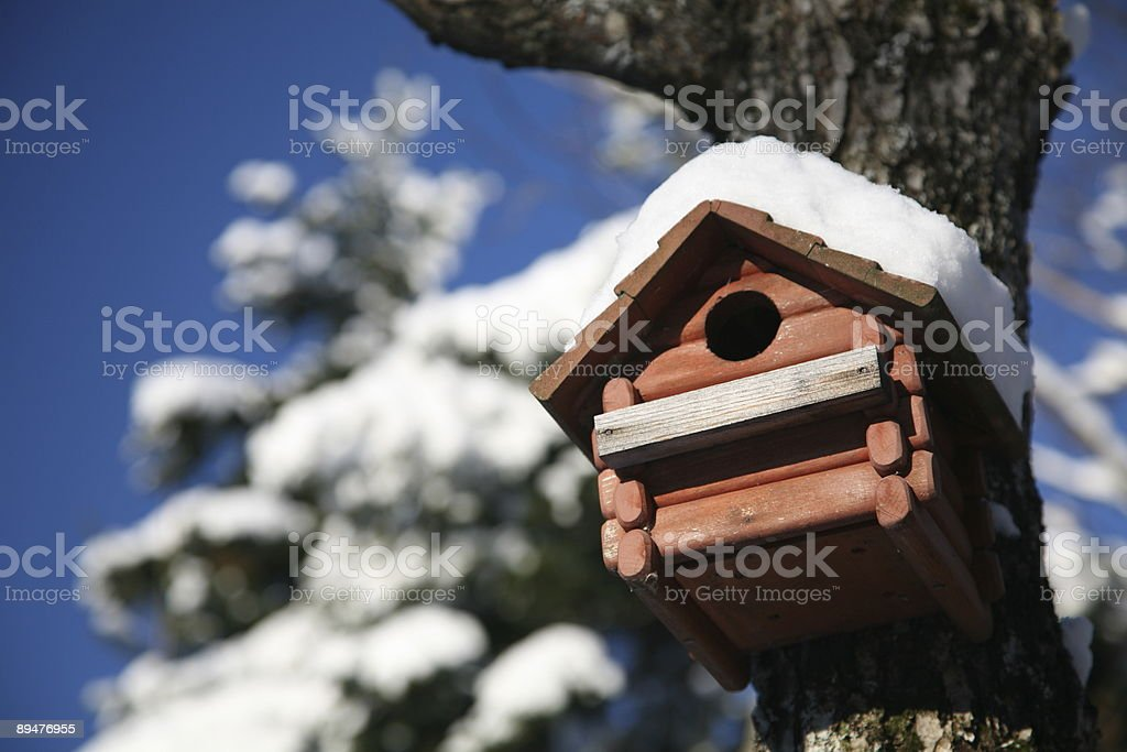 Birdhouse in maple tree during winter season royalty-free stock photo