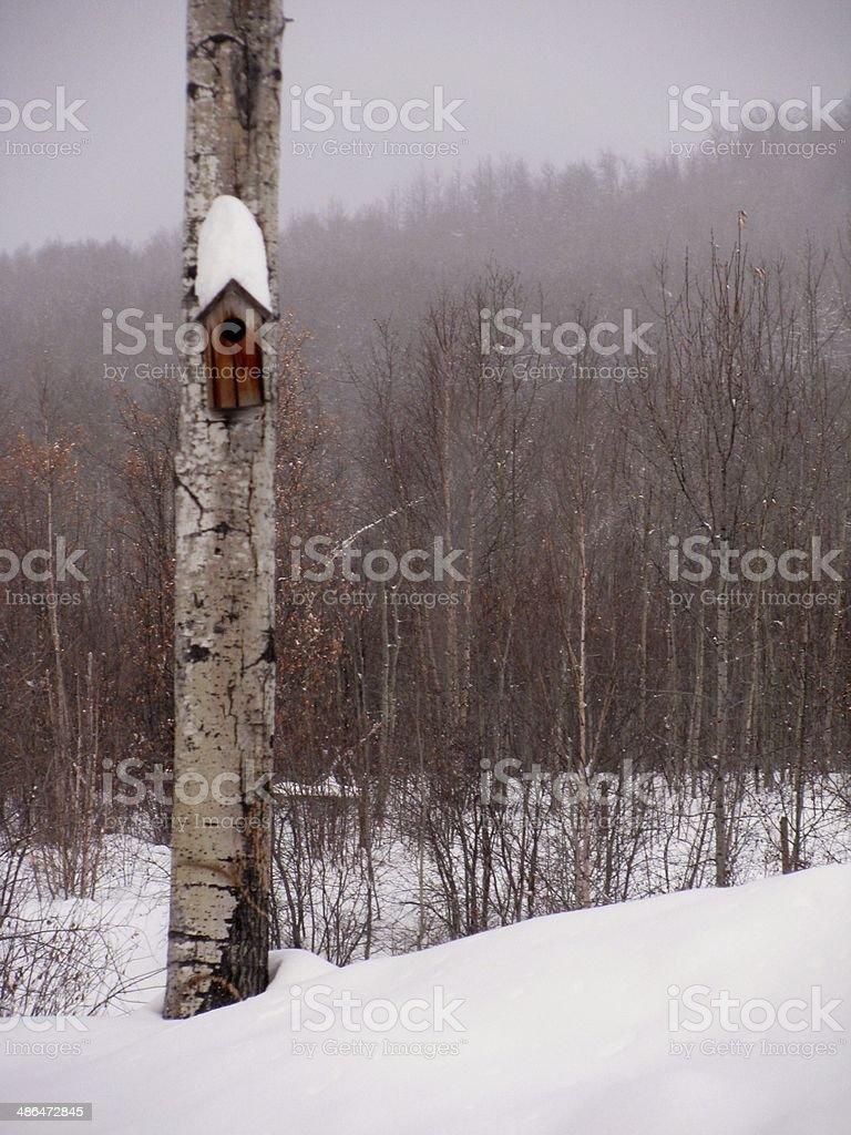 Birdhouse In Winter stock photo