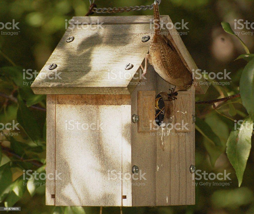 Birdhouse mother feeding baby spider royalty-free stock photo