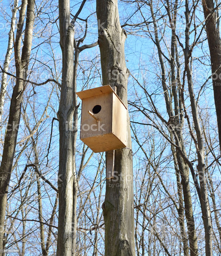 Birdhouse on a high tree in the forest stock photo