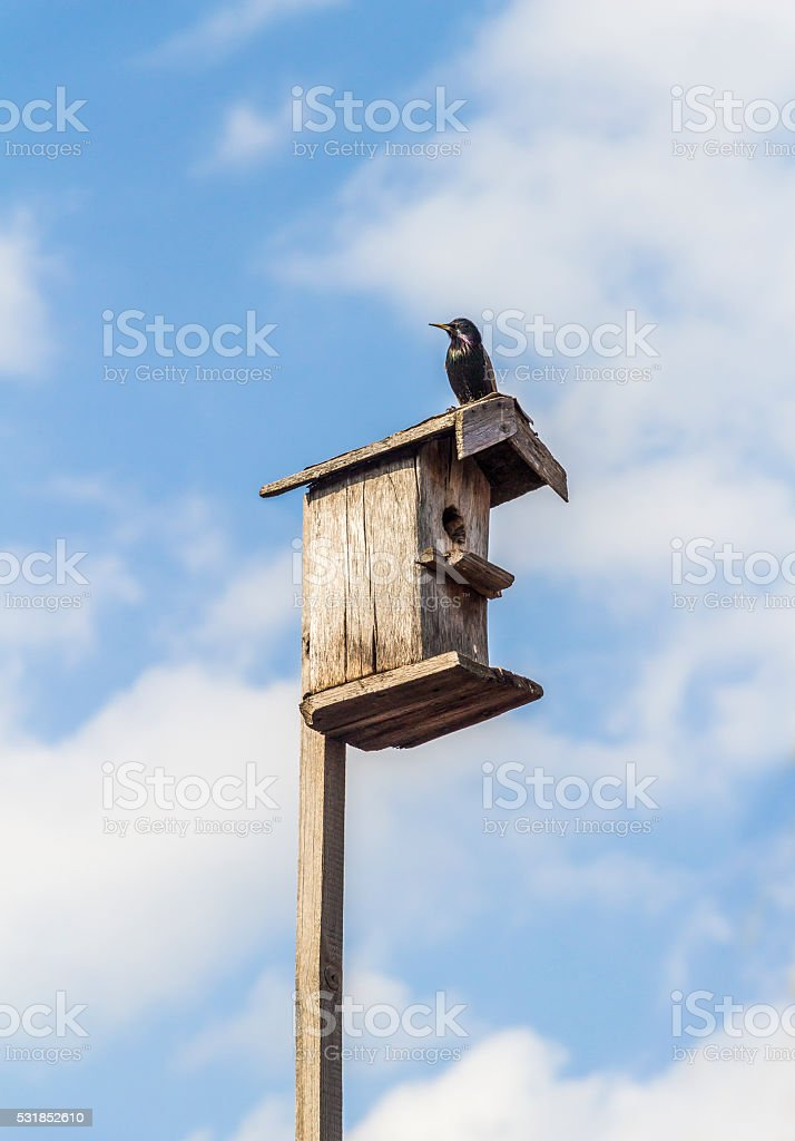 Birdhouse on a stick stock photo