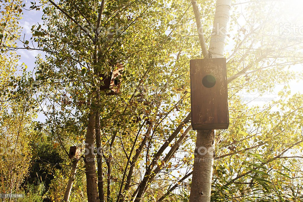 Birdhouse on Trees royalty-free stock photo