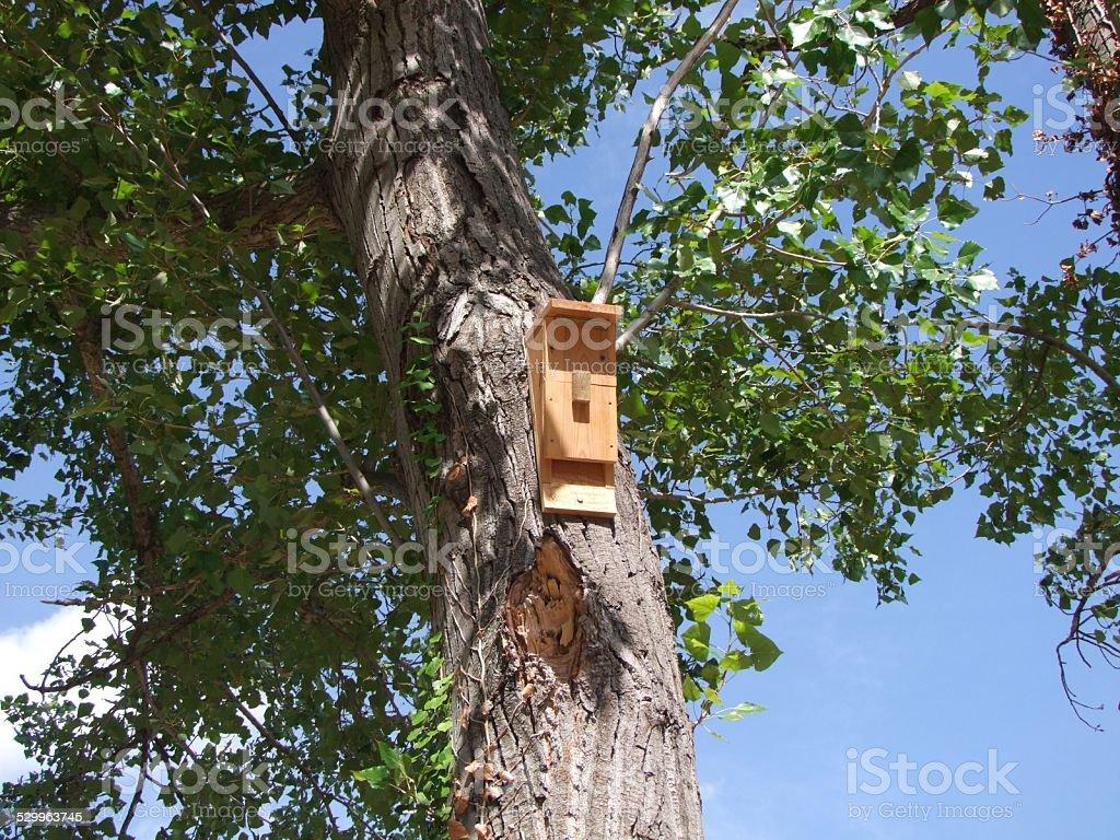 Casa de Pássaro foto royalty-free