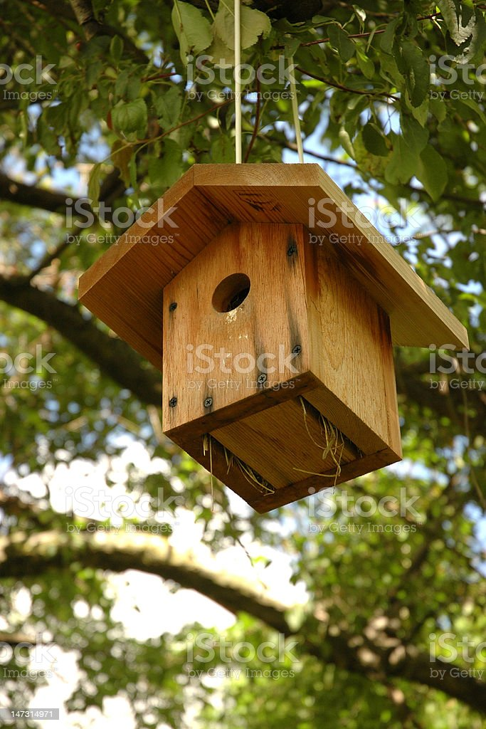 Birdhouse Under Tree Canopy from Low Angle royalty-free stock photo