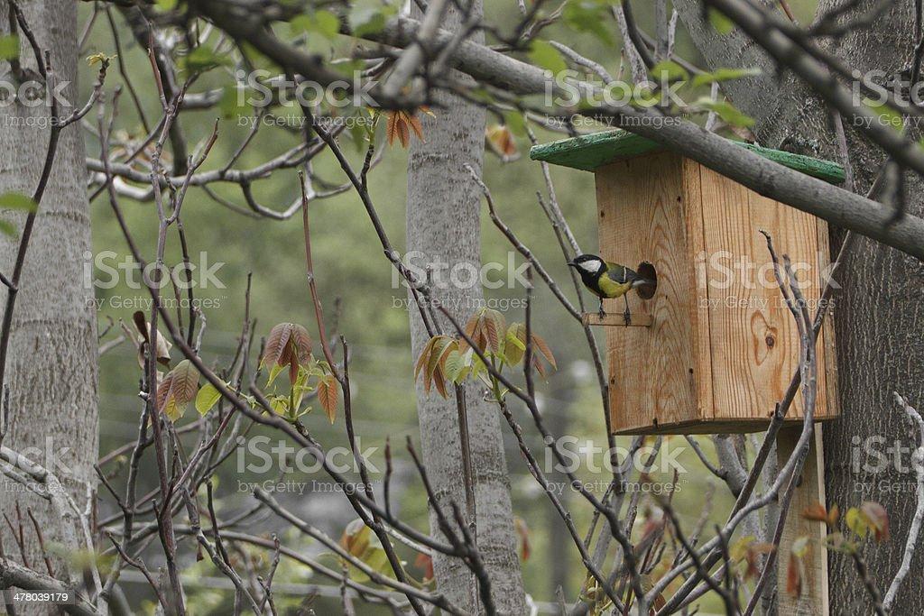 birdhouse with bird stock photo