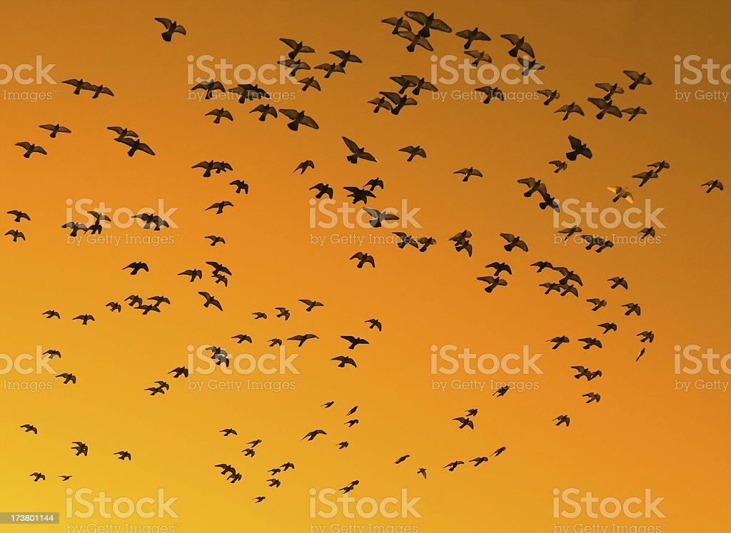 Birds Against An Orange Sky stock photo