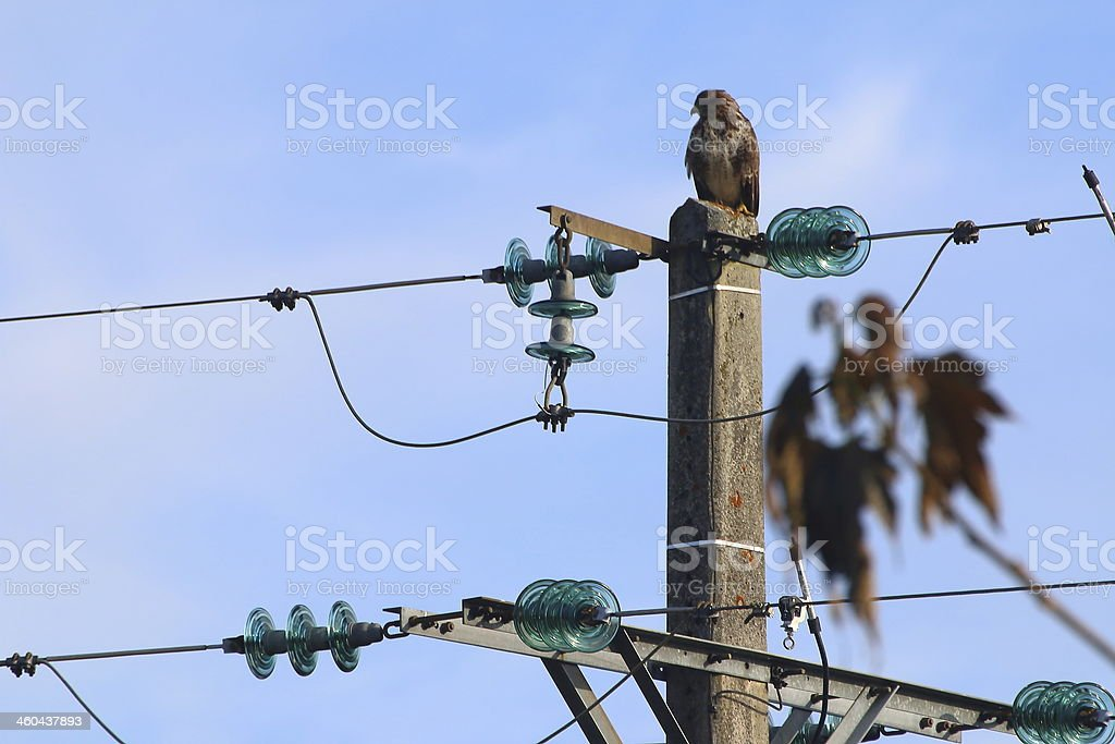 Birds and electricity pylon royalty-free stock photo