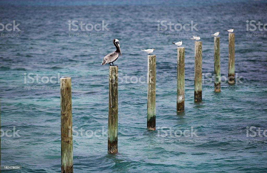 birds and ocean royalty-free stock photo