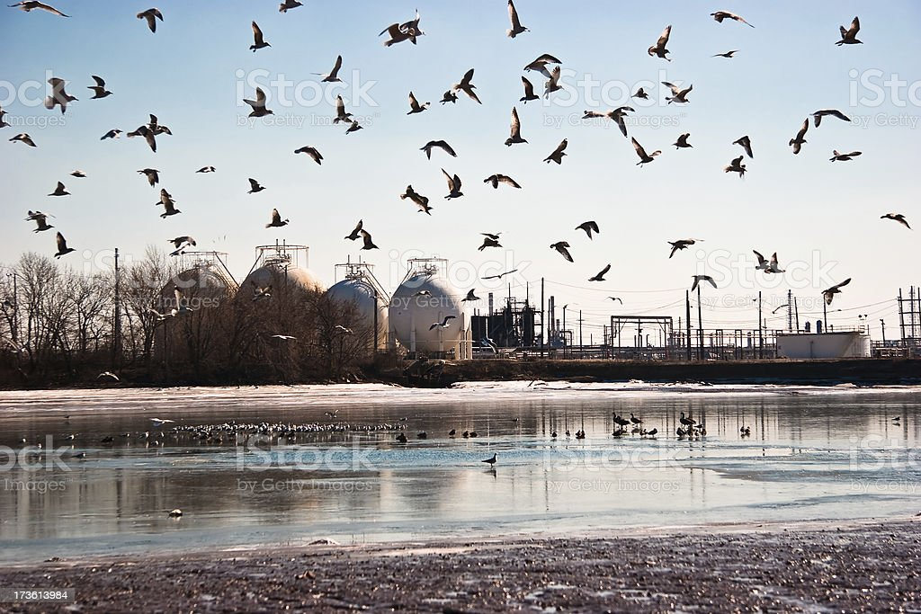 Birds and Refineries royalty-free stock photo