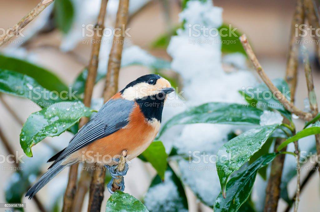 Birds and snow stock photo