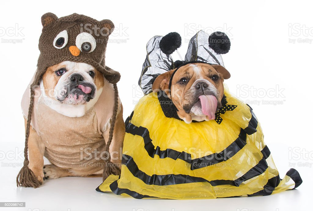 birds and the bees stock photo
